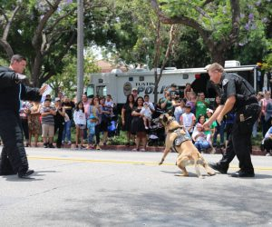 2019 K-9 Demonstration at TPD Open House